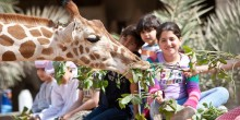 المخيم الصيفي في حديقة الإمارات للحيوانات