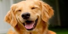 تفسير حلم الكلاب