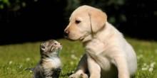 دبي: اتفقا على الطلاق وحضانة الأطفال واختلفا على رعاية حيواناتهما الأليفة
