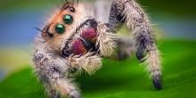 تفسير حلم العنكبوت