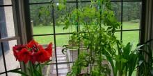 أضيفي لمسة جمالية على ديكور المنزل بالنباتات