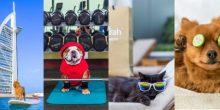 فندق في دبي يستقبل الحيوانات الأليفة بخدمات فاخرة