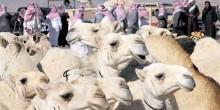 السعودية تواصل فرض حظر الإبل في مكة والمشاعر المقدسة