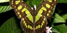 تفسير حلم الحشرات