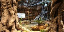 بالصور: أول غابة استوائية مغلقة في دبي