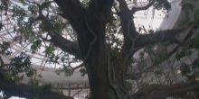 شاهد بالفديو: غابة استوائية في قلب دبي