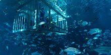"""استمتعوا بتجربة لقاء القرش في """"دبي أكواريوم"""""""