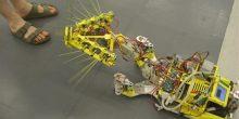 روبوتات بيولوجية وهندسة طبية حيوية في جامعة خليفة