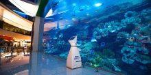 توفير ثلاث أسماك قرش روبوتية وشاشات عرض تفاعلية في دبي أكواريوم