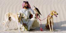 استتمتع بتجربة شيقة في صحراء أبوظبي من خلال عرض الصيد بالصقور وكلاب السلوقي