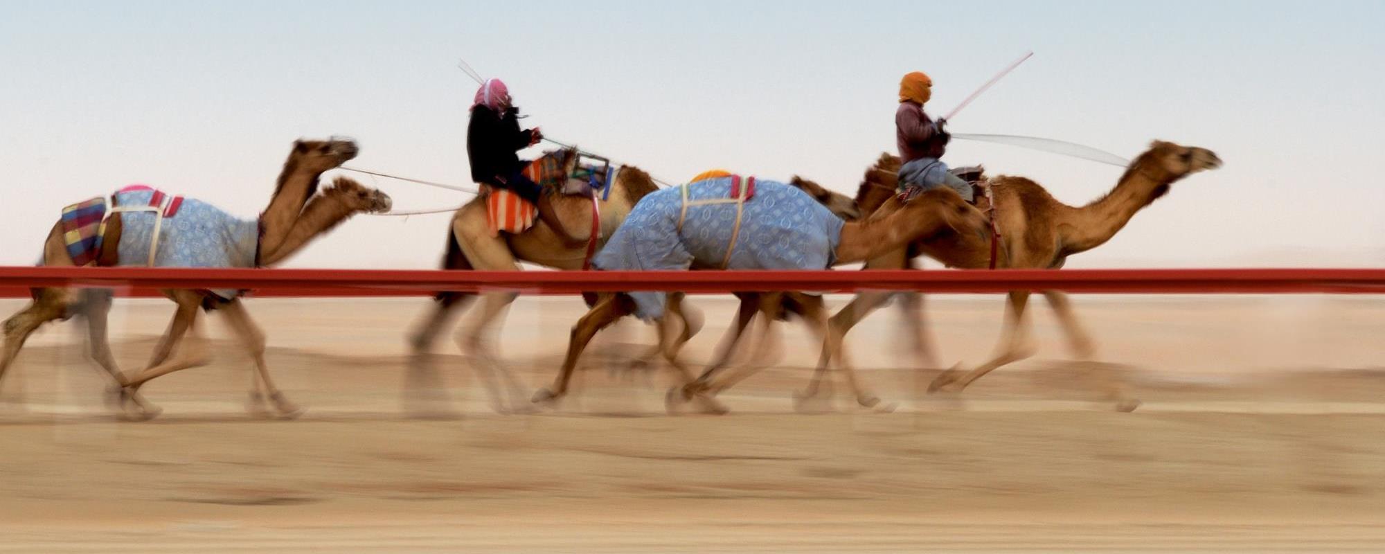 سباقات الهجن في أبوظبي