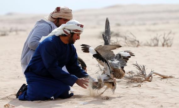 عرض الصيد بالصقور وكلاب السلوقي في أبوظبي