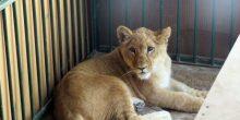 الحيوانات الأليفة غير المألوفة تواجه مشكلة الإهمال في دبي