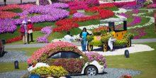 اكتشف عالما من الإبداع والروعة في حديقة الزهور بدبي