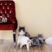 أيلورومنيا كافيه: مطعم مخصص لمحبي القطط في دبي