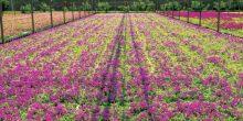 بلدية دبي | 20 مليون زهرة لاستقبال فصل الشتاء