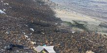 بلدية دبي تؤكد أن المخلفات الموجودة على شاطئ الخور سببها المد والجزر