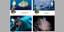 """تعرف على الصور الفائزة بجائزة حمدان بن محمد """"التصوير تحت الماء"""" لشهر نوفمبر"""