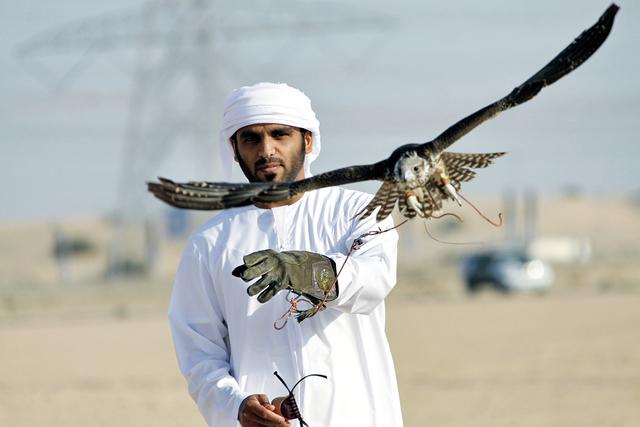 الصيد بالصقور في دبي