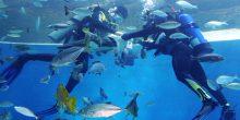 تعرف على أفضل حدائق الأحياء المائية في دبي