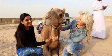 بالفيديو | 13 مغامراً يستعدون لرحلة على الجمال في الإمارات