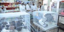بلدية أبوظبي | الفحوصات الدورية تؤكد عدم وجود أمراض بالطيور