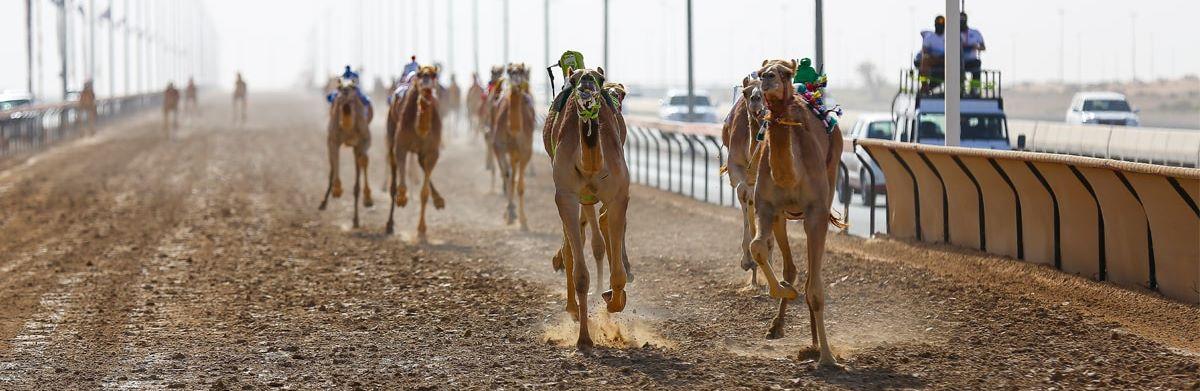 Camel-Race-1-hero-deskto-events-spotlight
