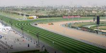 سباقات الخيل في ميدان – 14 يناير 2017