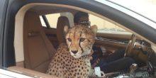 تعرف على القانون الجديد الذي يضع حدًا لتربية الحيوانات الخطرة في الإمارات