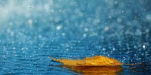 تفسير حلم نزول المطر