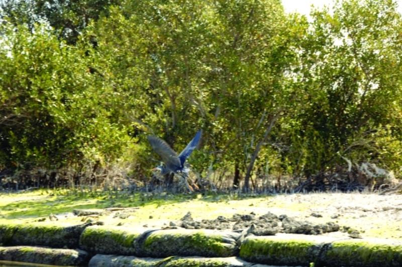 متنزه محمية القرم
