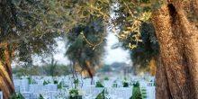 منتجع بير أكووم ديزرت : وجهتك المثلى لحفل زفاف شديد الروعة