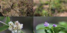 اكتشاف 8 أنواع جديدة من النباتات في الإمارات