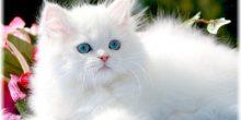 تفسير حلم القطة
