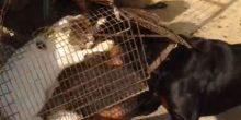 """تنظيف حديقة الحيوان في دبي 3 أشهر عقوبة الموقوفين في واقعة """"تعذيب القطة"""""""